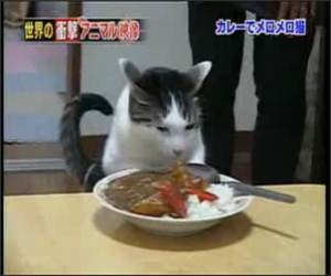 Cat Loves his Food Funny Video