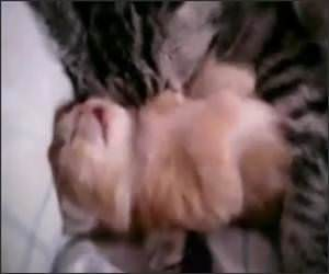 Kitten Bad Dreams Video