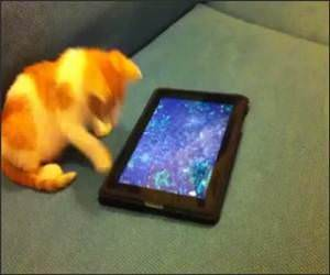 Kitten vs Ipad Funny Video