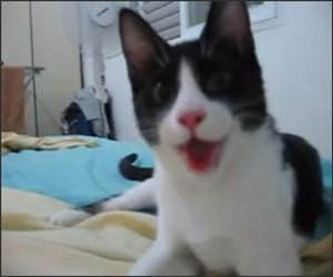 Kitten Think its a Puppy Funny Video