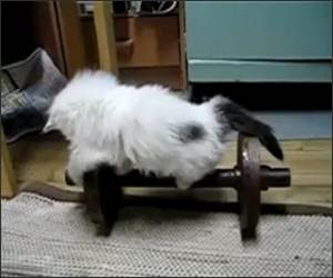 Kitten workout  Funny Video