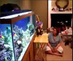 Kitten attacking fish tank Video
