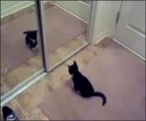 Kitten Mirror Fight
