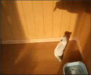 Kittens Vs Shadow Funny Video