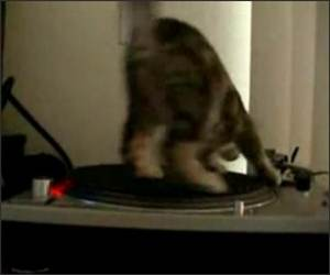 Kitty DJ Funny Video