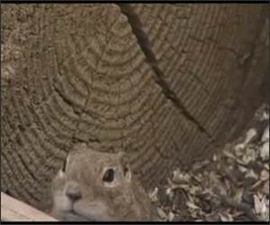 Laughing Chipmunk Funny Video