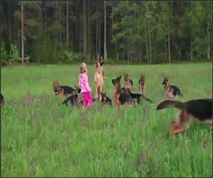 14 German Shephards Funny Video