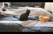 making a bed with cats Funny Video