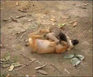 Monkey Playing with a Dog Funny Video