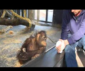 monkey sees a magic trick Funny Video