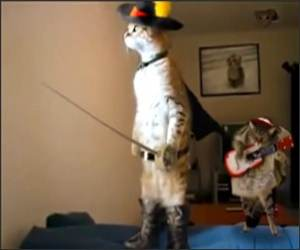 The Musketeer Cat  Funny Video