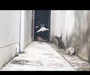 ninja cats jumping all over the place Funny Video
