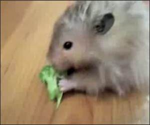NOM NOM NOM NOM NOM Funny Video