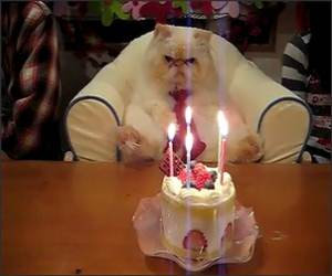 The cats Birthday Funny Video