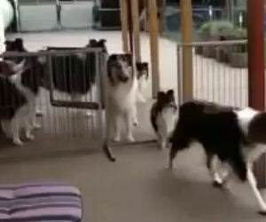 patient well trained dogs Funny Video