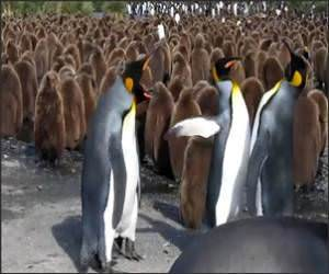 Penguin Slap FestVideo