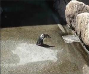 Penguin Vs Butterfly Funny Video