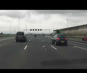 pigeon racing down highway Funny Video
