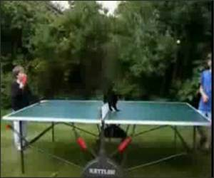 Ping Pong Cat Funny Video