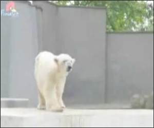 Polar Bear Dance Video