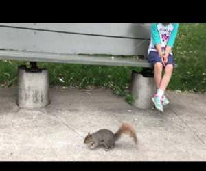 pulling a tooth using a squirrel Funny Video