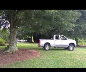 pulling a tree down using a truck Funny Video