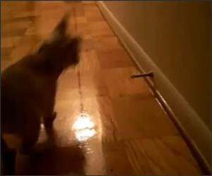 Puppy vs Door Spring Funny Video