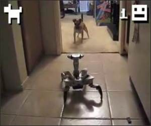 Puppy Vs Robot Funny Videos