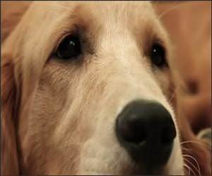 Sad Dog Diary Funny Video