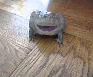 screaming frog Funny Video