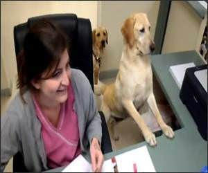 Secretary Dog Funny Video