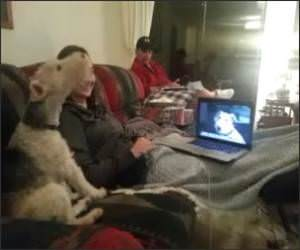 Skyping Dogs Funny Video