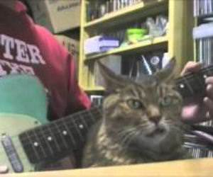 Snaggletooth cat bopping along Funny Video
