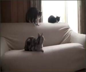 Sneak Attack Cat Funny Video