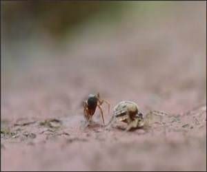 Spider Vs Ant Funny Video