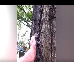 squirrel rescue gone wrong Funny Video