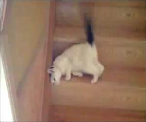 Steps Cat Funny Video