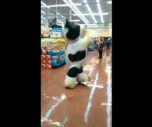 supermarket cow dance Funny Video
