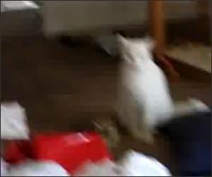 Talking Evil Cat Funny Video