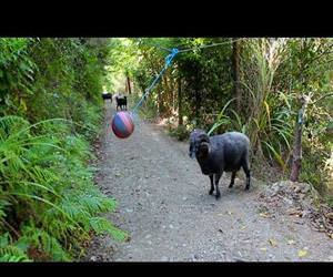 tetherball left in the forest Funny Video
