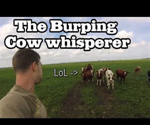 the burping cow whisperer Funny Video