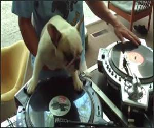 DJ Doggy Dog Funny Video