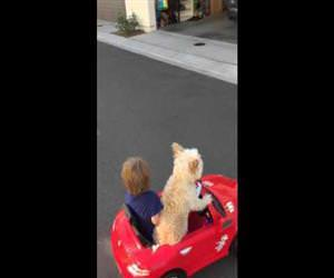 the dog is steering Funny Video