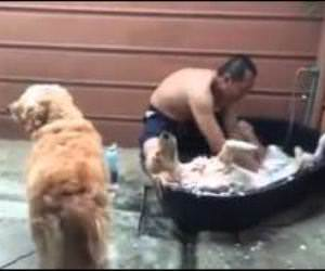 The dog spa Funny Video