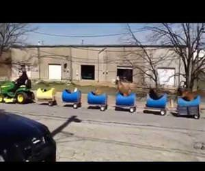the dog train Funny Video