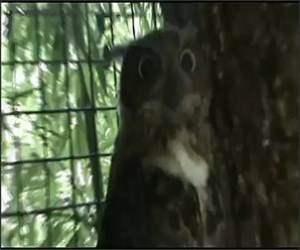 The epic owl Funny Video