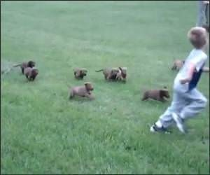 The army of Puppies Video