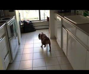 the moonwalking dog Funny Video