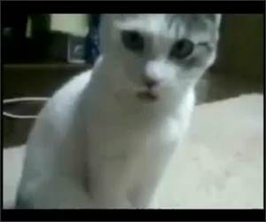 The OMG cat remix Funny Video