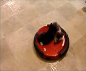 The Roomba Kittens Funny Video